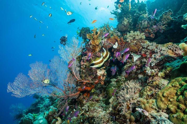 Reef GBR1