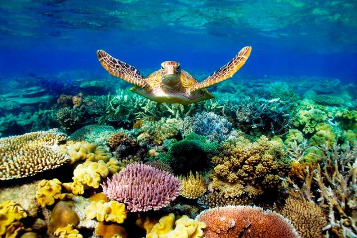 Reef GBR2