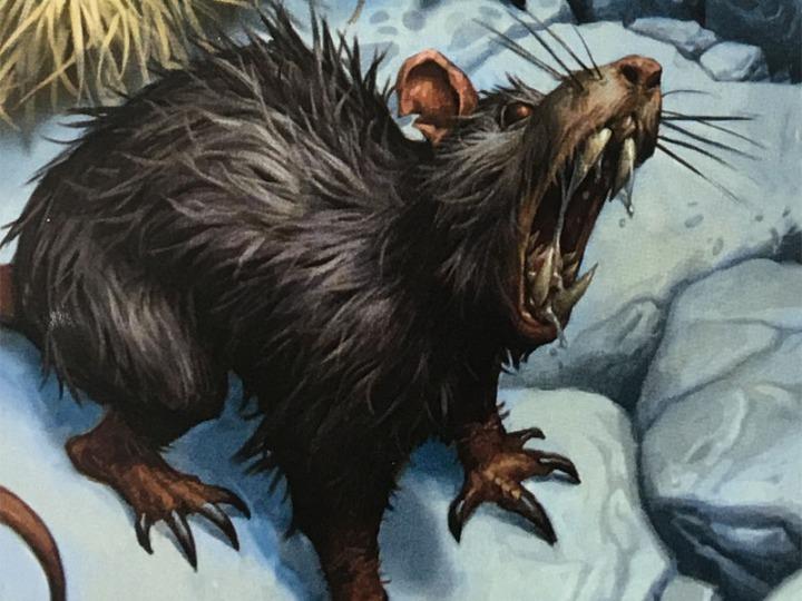 Giant Rat 1